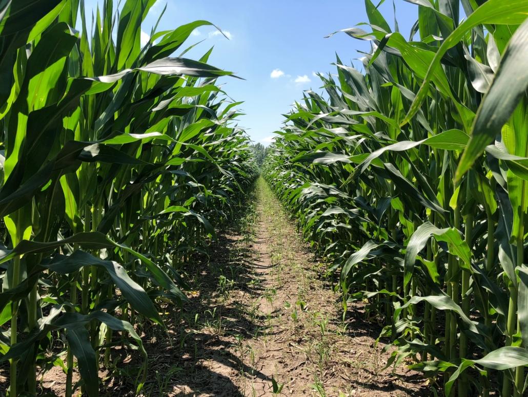Corn Continuum Ag