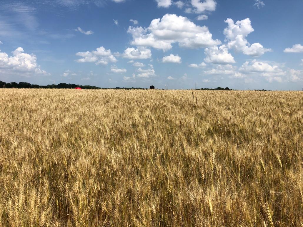 grain quality testing